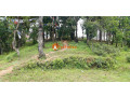 land-for-sale-in-whitegumba-small-0