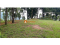 land-for-sale-in-whitegumba-small-1