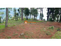 land-for-sale-in-whitegumba-small-2