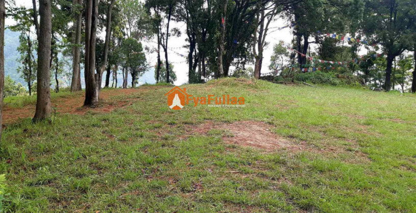 land-for-sale-in-whitegumba-big-1