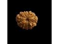 rudraksha-by-nepal-rudraksha-small-0