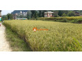 land-sale-in-lubhu-small-1